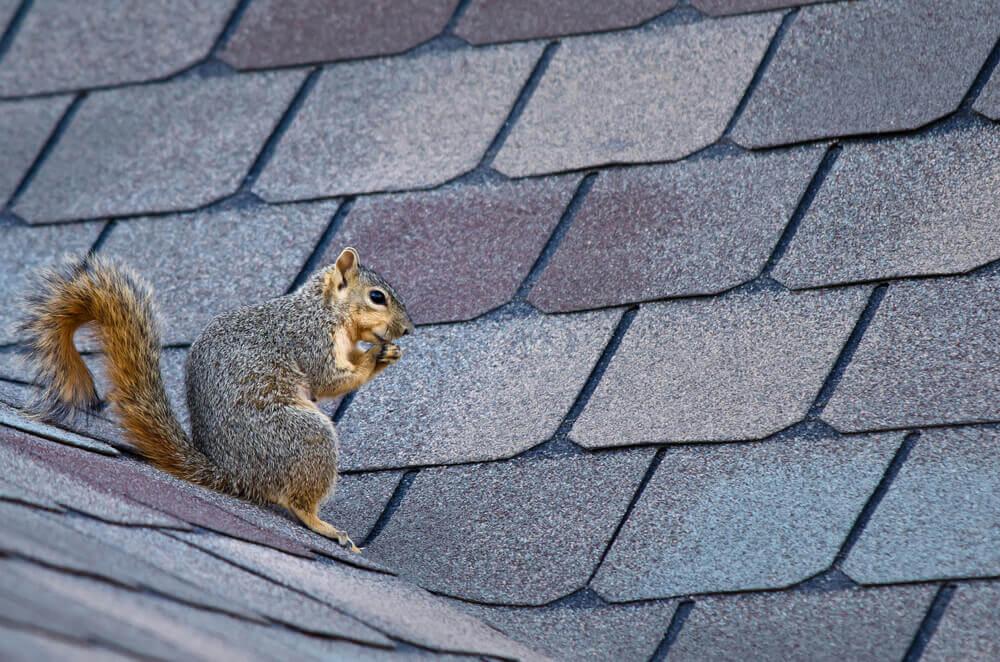 Solar Panel Squirrel Damage